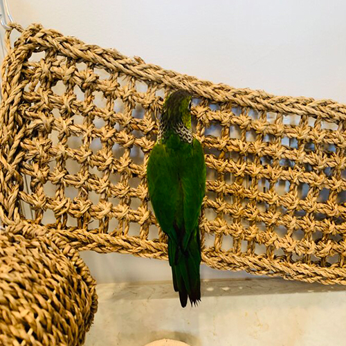 Pet Toys Hammock Lizard Lounger