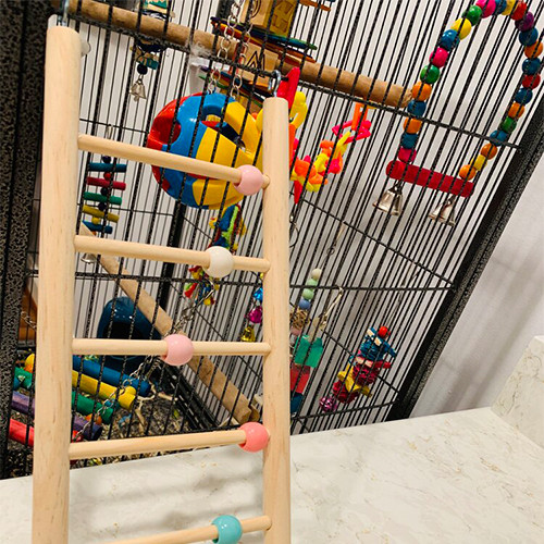 Ladder, Play and Climb Toy