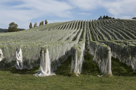 Types of Bird Netting for Vineyards and Wineries - Bird B