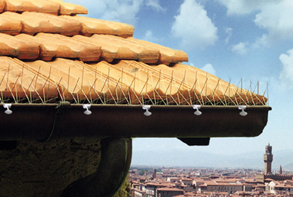 How To Keep Birds Away From Roofs And Gutters With Anti