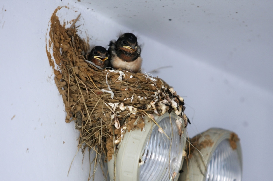 The Dangers Of Bird Nests And Why You Want To Keep Them Off Your