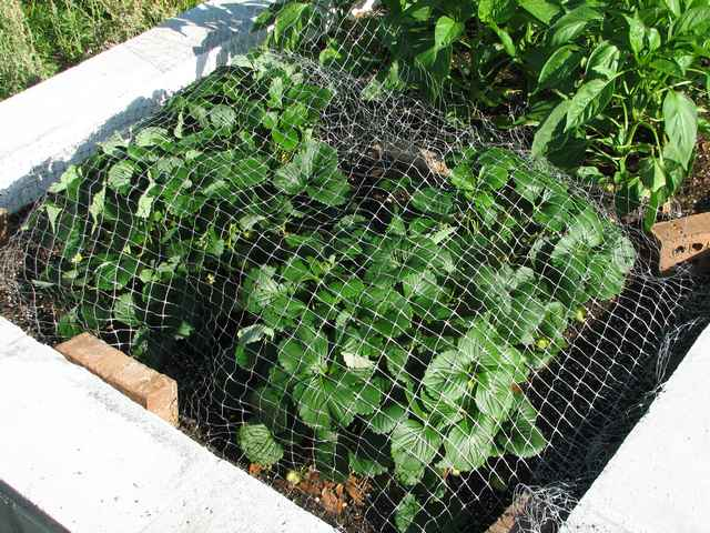 Plant Netting For Gardens Keeps Birds Out Bird B Gone Inc