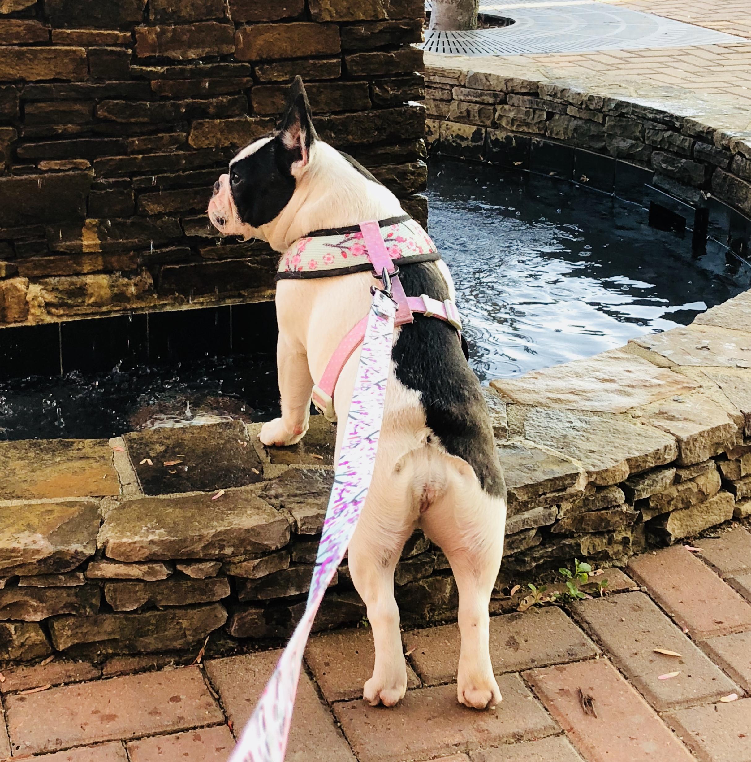 ella-water-fountain.jpg