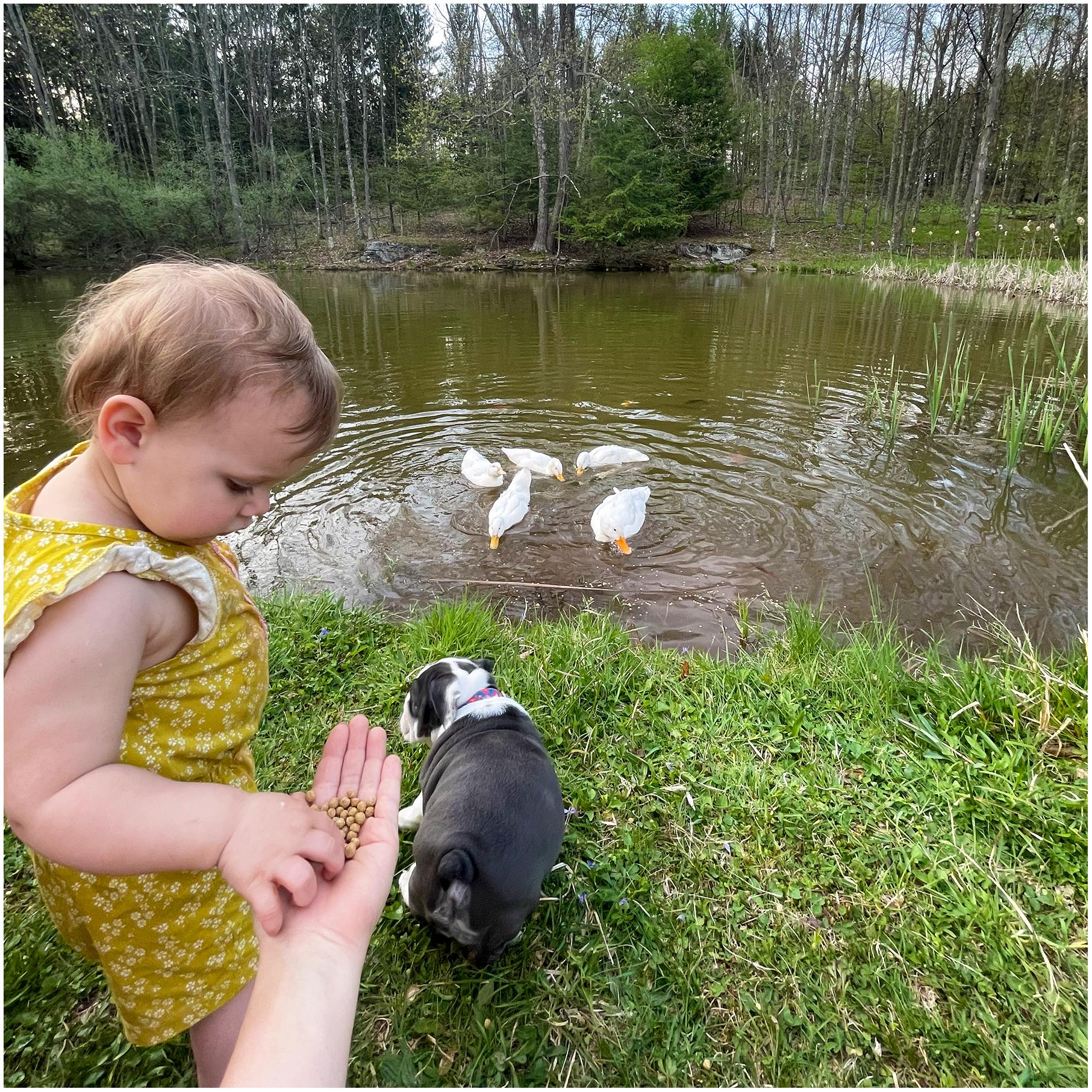 girl-feeding-ducks-in-duck-pond.jpg