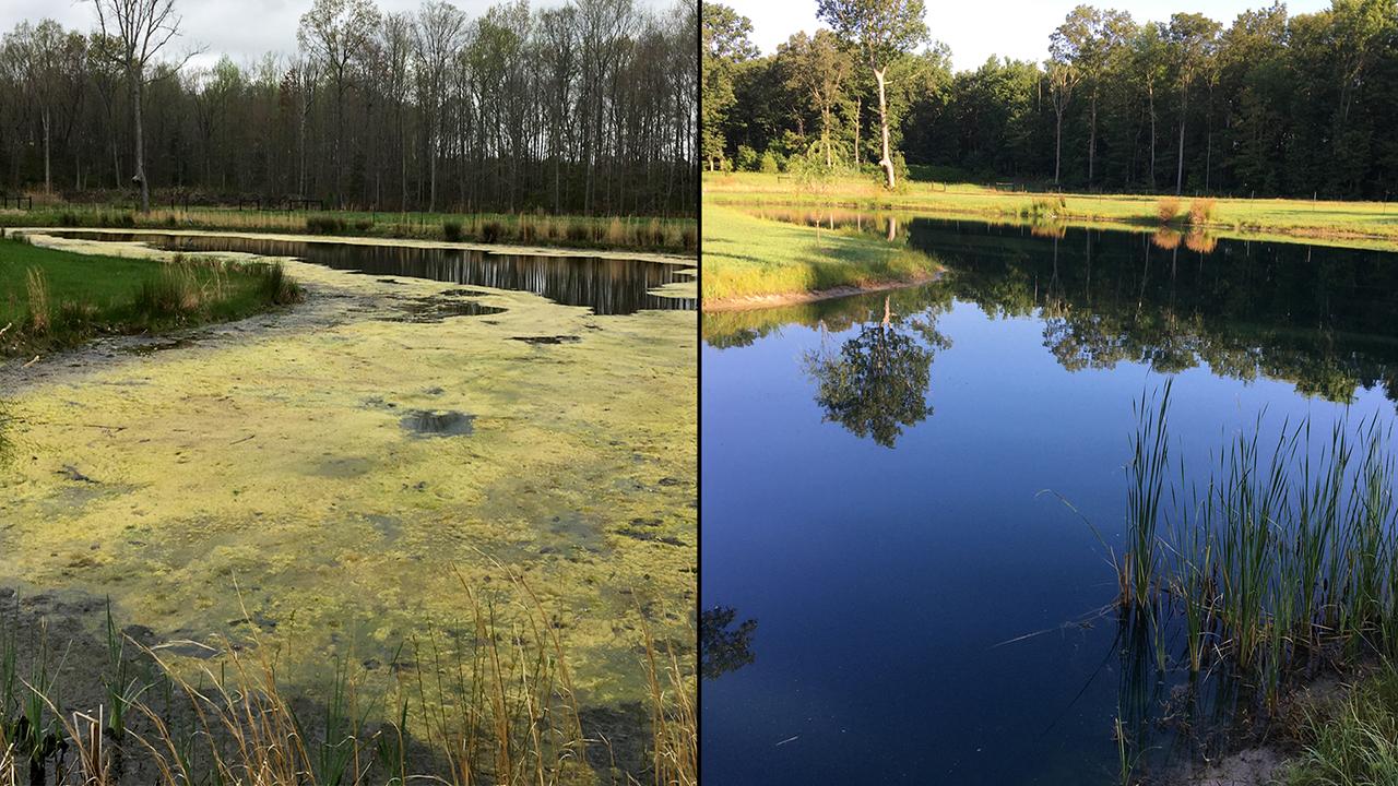 delaware, pond, algae, pond weeds, clear pond, muck remover, cutrine, pond dye,
