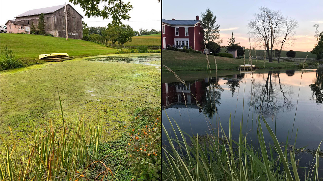 algae, nutrients, cutrine, pond weeds, pond treatments, cutrine plus,
