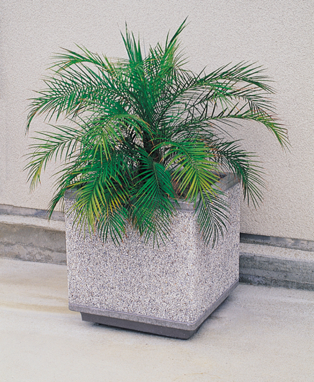 Outdoor Square Concrete Planter TF4185 with Fern Exposed Aggregate