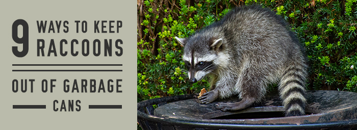 9 Ways To Keep Raccoons Out Of Garbage Cans Trash Cans