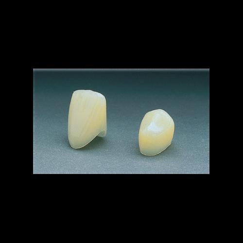 Polycarbonate Crowns  22