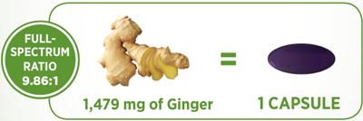 gingerforcetip.png