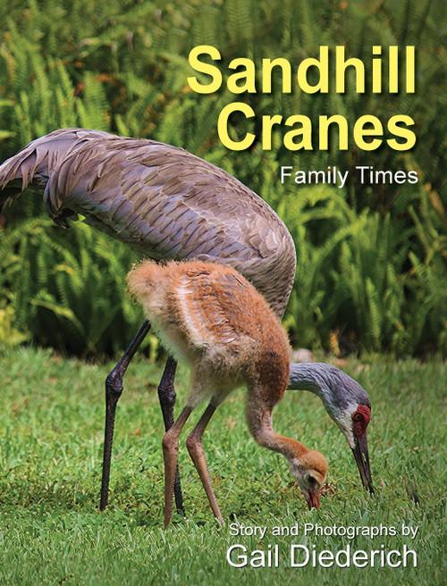 Sandhill Cranes, Family Times
