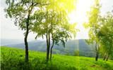 Sandalwood (East Indian) Organic Essential Oil