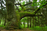 Oakmoss Absolute Essential Oil (Semi-Solid) *Back Ordered*