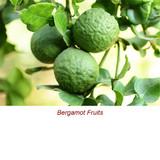 Bergamot (Bergaptene Free) Essential Oil