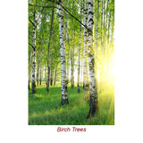 Birch (Sweet) Essential Oil with Certified Child Resistant Cap