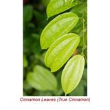 Cinnamon Leaf Organic Essential Oil