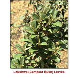 Leleshwa Wild Crafted Essential Oil