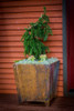 COOKE Copper Plated Planter