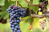 Barrel-Aged Red Wine Vinegar