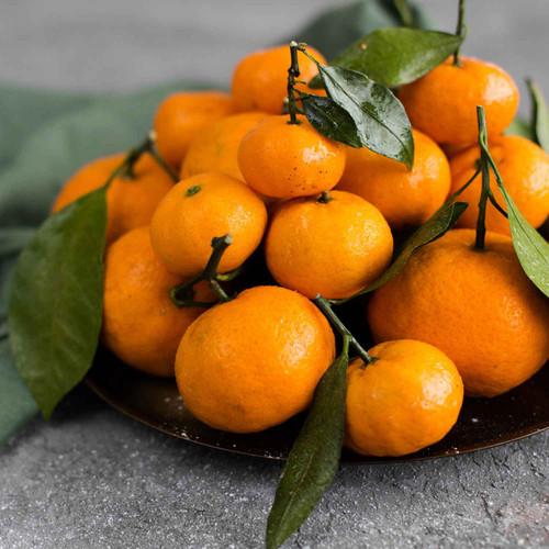 Buy Tangerine Dark Balsamic from Squizito Tasting Room