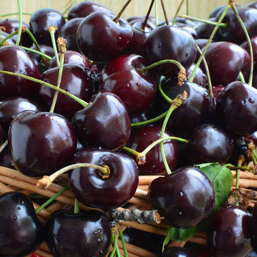 Buy Black Cherry Dark Balsamic from Squizito Tasting Room