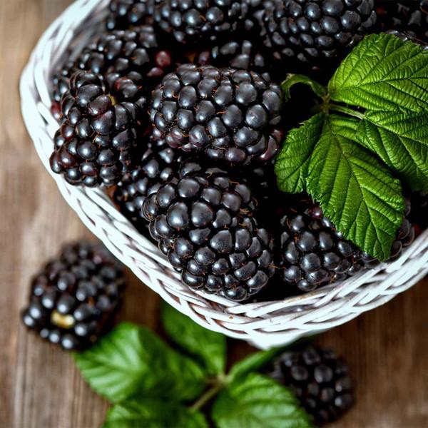 Buy Blackberry-Ginger Dark Balsamic from Squizito Tasting Room