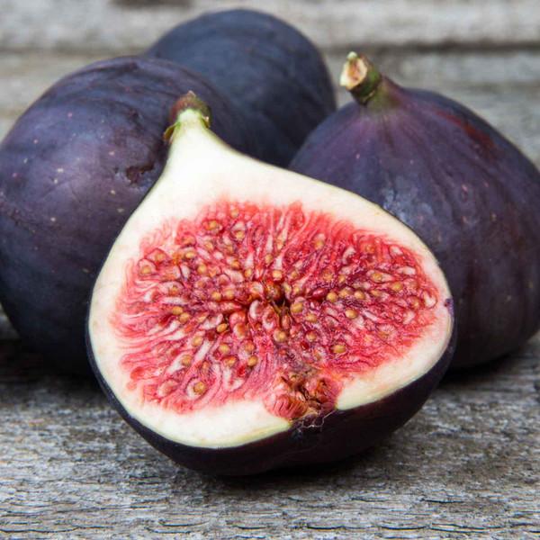 Buy Fig Dark Balsamic from Squizito Tasting Room