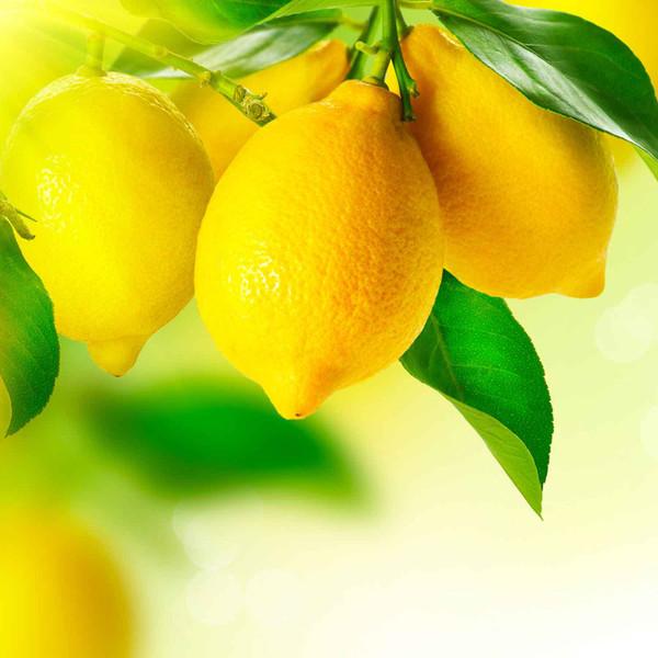 Buy Sicilian Lemon White Balsamic from Squizito Tasting Room