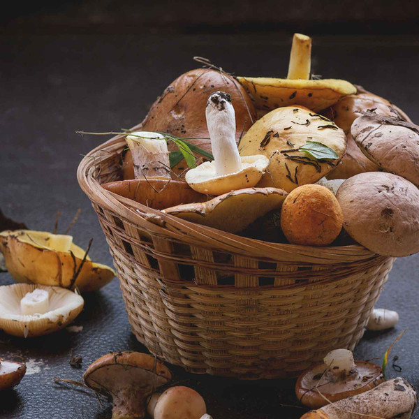 Buy Wild Mushroom & Sage Infused Olive Oil from Squizito Tasting Room