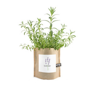 Heirloom Lavender Garden-in-a-Bag