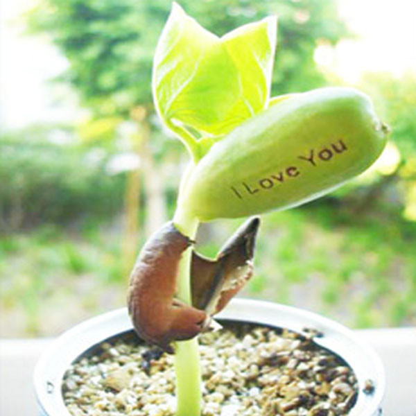 Nature's Greeting Magic Bean Plant: I Love You