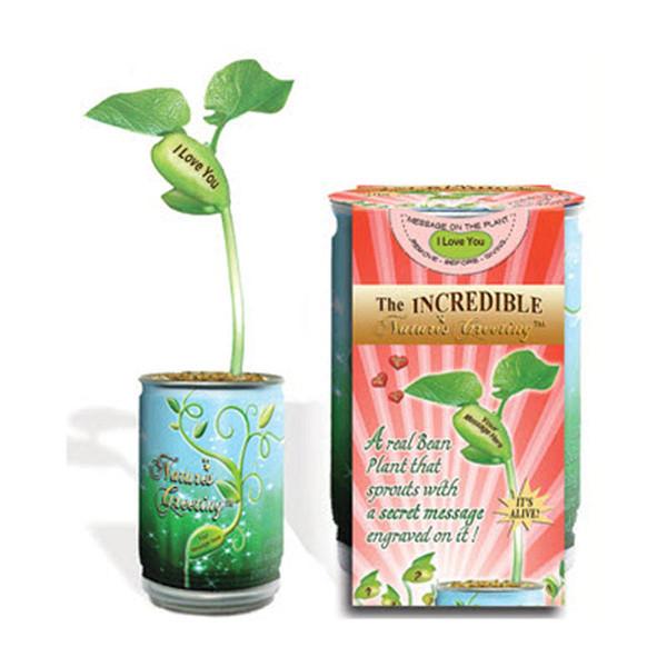 Nature's Greeting Magic Bean Plant: I Love You