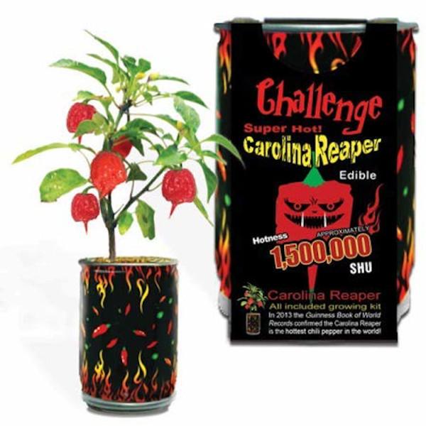 Carolina Reaper Plant Kit