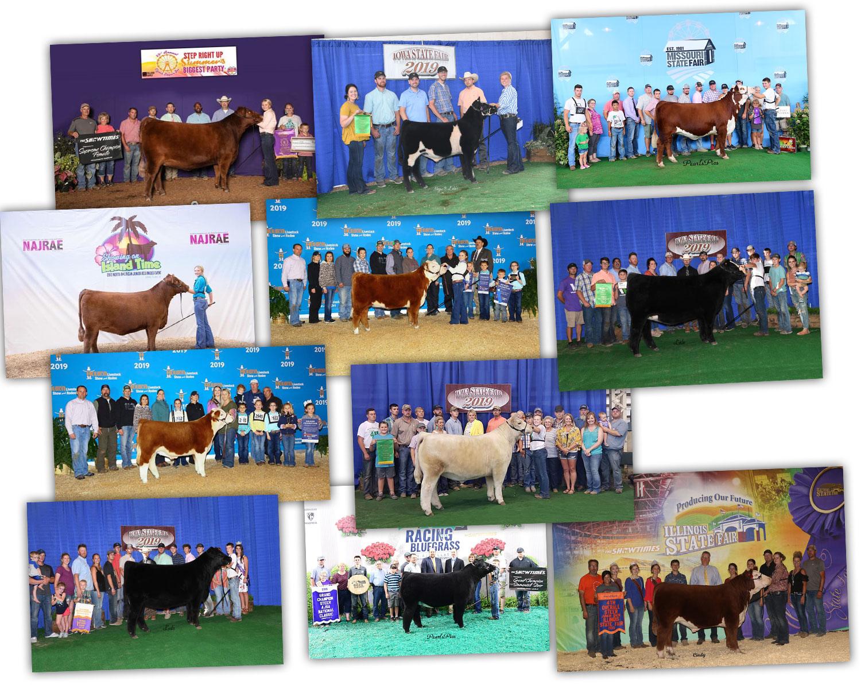 aug2019-cattle2.jpg