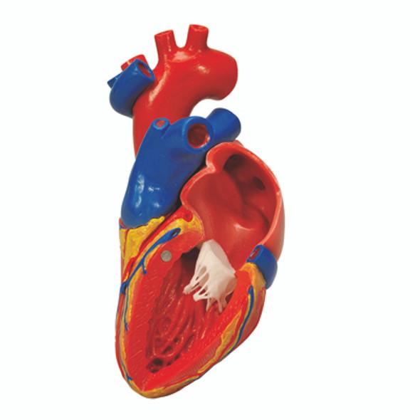 Heart Models