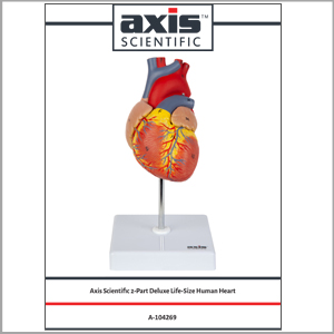 Axis Scientific Heart Model Full Color Product Manual and Study Guide is Included
