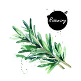 Made with fresh wild Rosemary crushed with early harvest, fresh picked, certified organic olives using 100% mechanical cold extraction methods. This fused herb oil embodies the heart and soul of rosemary. It is both complex and aromatic. Use anywhere rosemary might be used.