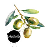 This is a beautiful oil from the Kalamata Peninsula of Greece. Fragrant, malty & creamy with notes of dried herbs and pine nut. This is an extremely early harvest example from Greece, harvested in early November; this variety matures slowly and is typically collected in late December through January.