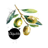 This is an exquisite delicate Portuguese Chiquitita. This uncommon variety is a cross between the classic Spanish Picual and Arbequina varieties. It is sweet, mild and creamy, with beautiful almond notes. There is no bitterness and it has a delightful fruity finish. This variety is sure to please the palate.
