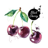 Rich and sweet, our All Natural Black Cherry Balsamic is made with Ultra Premium Aged Balsamic Vinegar to produce a sweet, rich product that has garnered rave reviews.