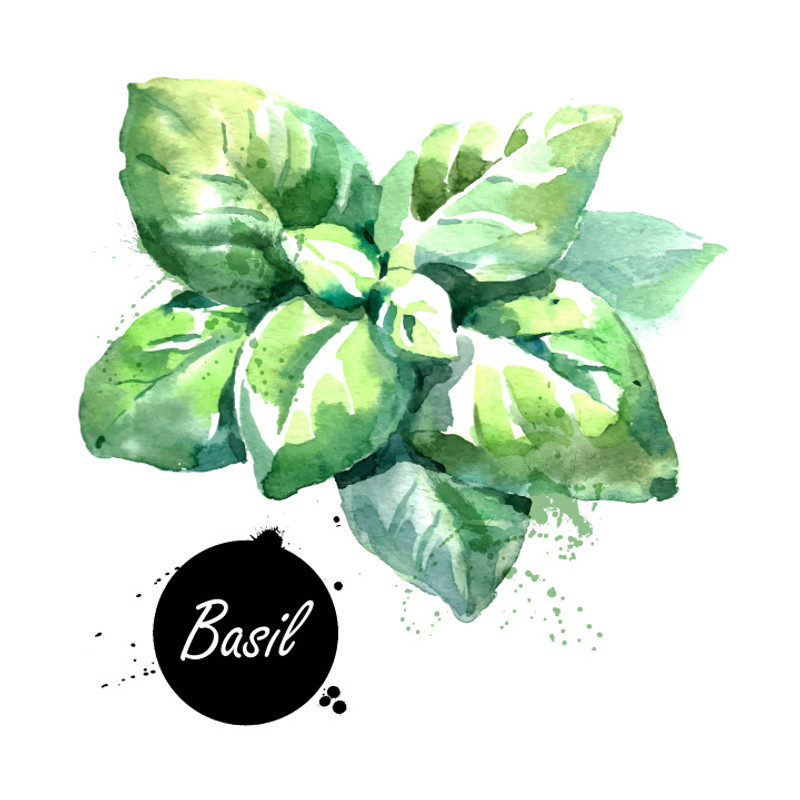 Fresh, bright and herbaceous – this amazing infusion is made from Certified Ultra Premium Olive Oil infused with essential basil oil. Fantastic anywhere you'd like the fresh, herbaceous flavor of basil.