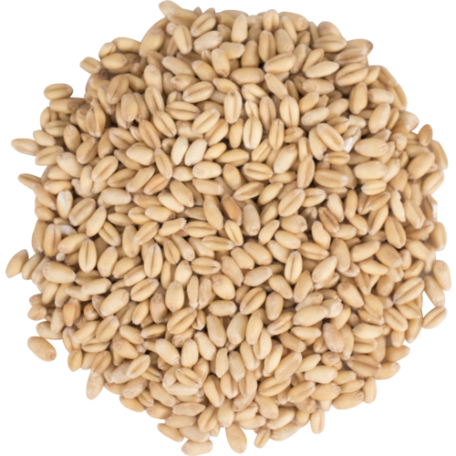 Briess Raw White Wheat - 1 Lb