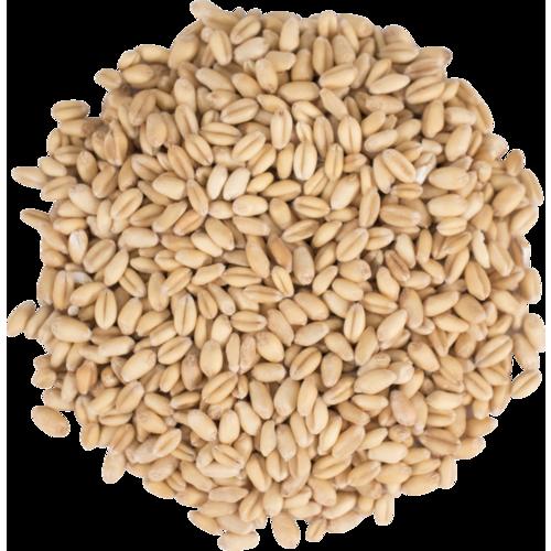 Briess Raw White Wheat - 1 Oz