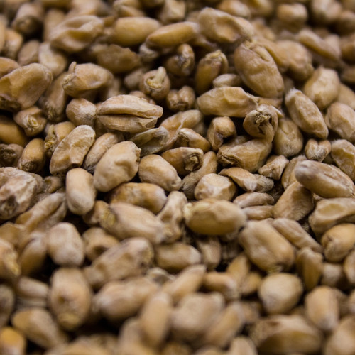 BestMalz Wheat Malt, BestMalz Wheat Malt, Malted Wheat