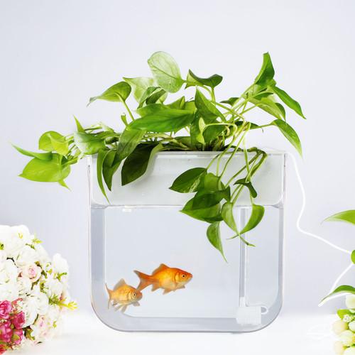Joyfay 3.2 Gallon Aquaponic Fish Tank