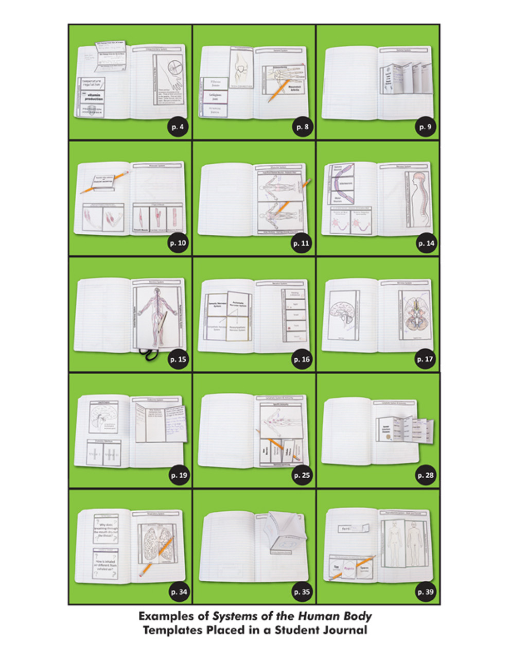 Nc humanbodysystems nov11 layout 1 (page 03)