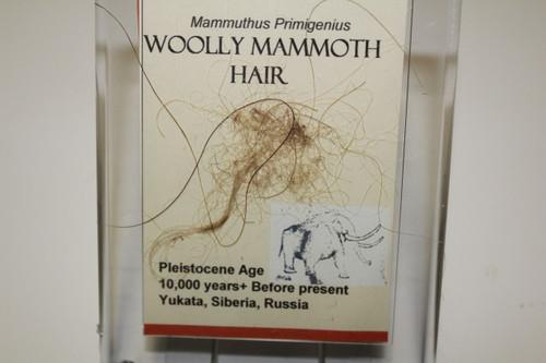 Mammoth HAIR (H1)