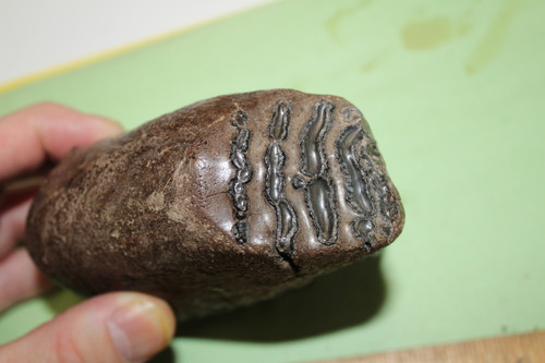 Mammoth Tooth Fossil 15,000 Yrs Old (MT5)
