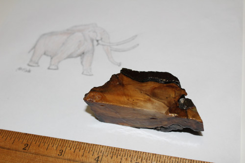 Copy of Mammoth Tooth Slice Fossil (T11)