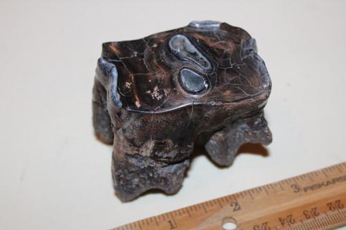 Woolly Rhinoceros TOOTH Fossil Grade A (MWR4)